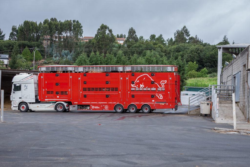 Transporte del ganado