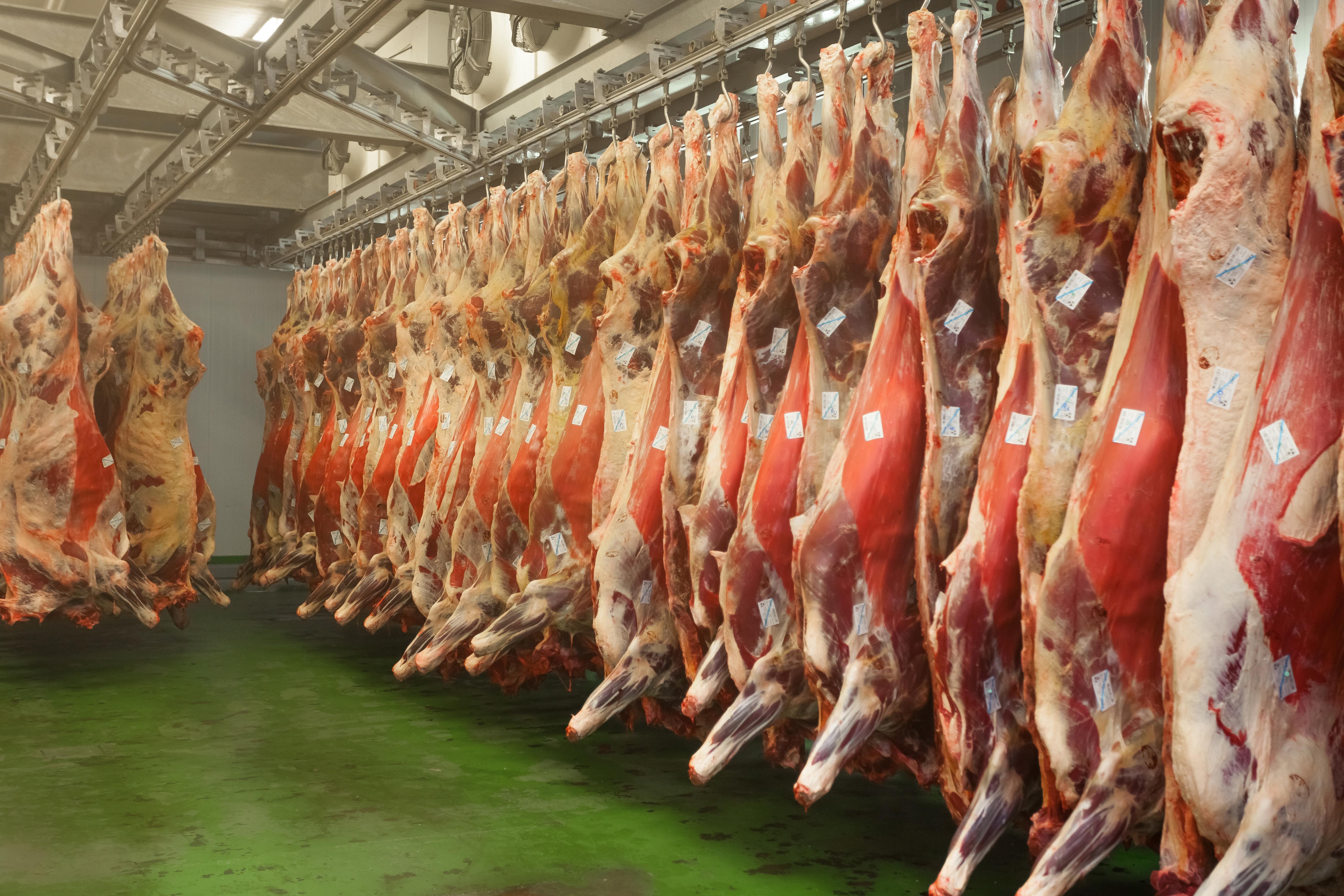 Carne de vaca vieja