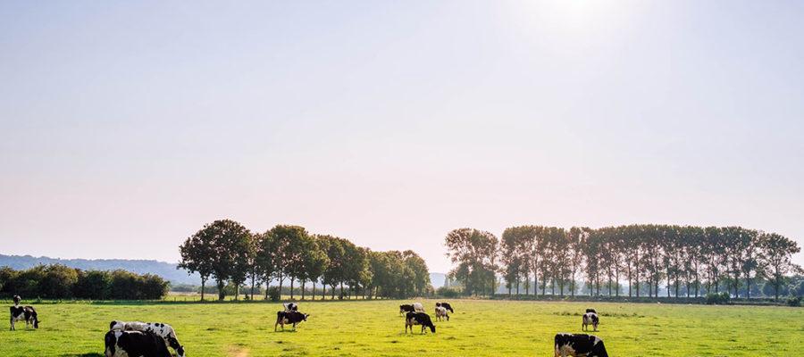 El Compromiso Del Sector Cárnico Con El Medio Ambiente