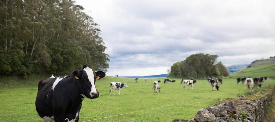 Contén Antibióticos A Carne Que Consumimos?