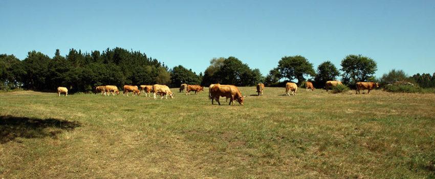 O Sector Do Vacún De Carne Reforza O Seu Compromiso Coa Conservación Do Medio Ambiente