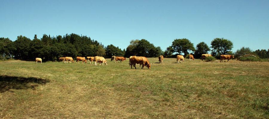 El Sector Del Vacuno De Carne Refuerza Su Compromiso Con La Conservación Del Medio Ambiente