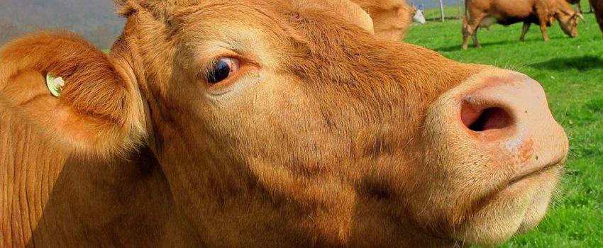 O Consello De Europa Adoptou Novas Conclusións Sobre O Benestar Animal